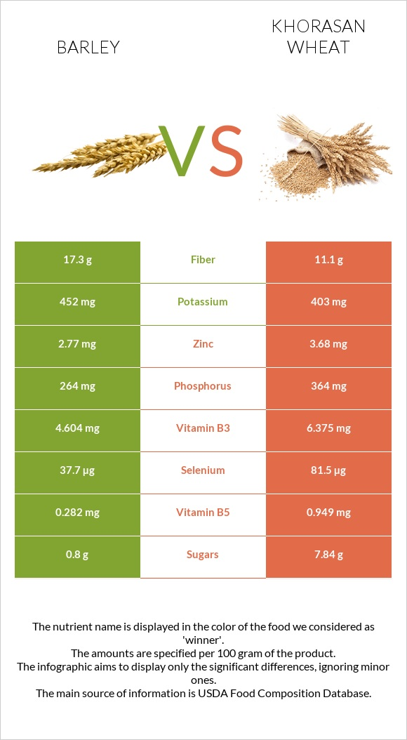 Barley vs Khorasan wheat infographic