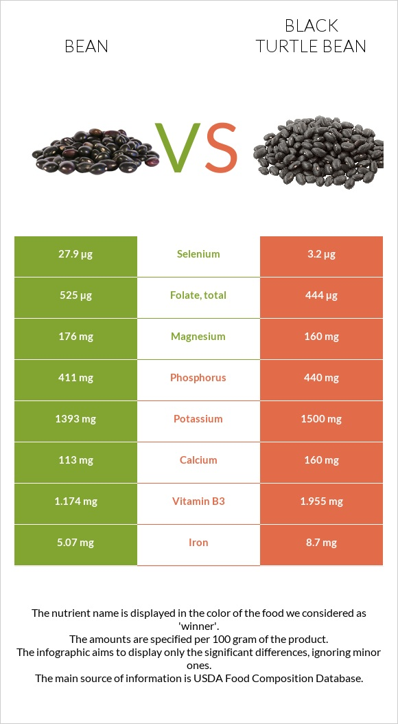Bean vs Black turtle bean infographic
