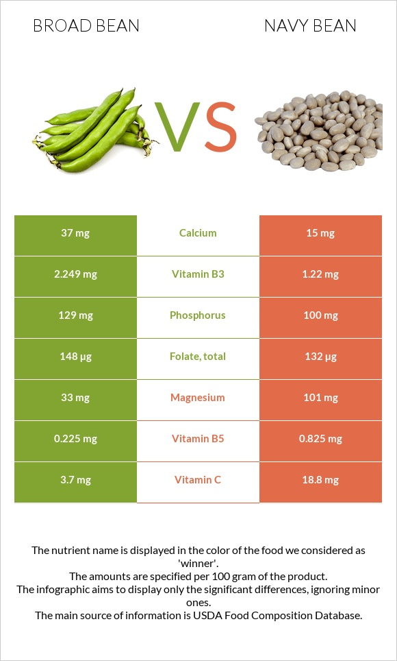 Broad bean vs Navy bean infographic