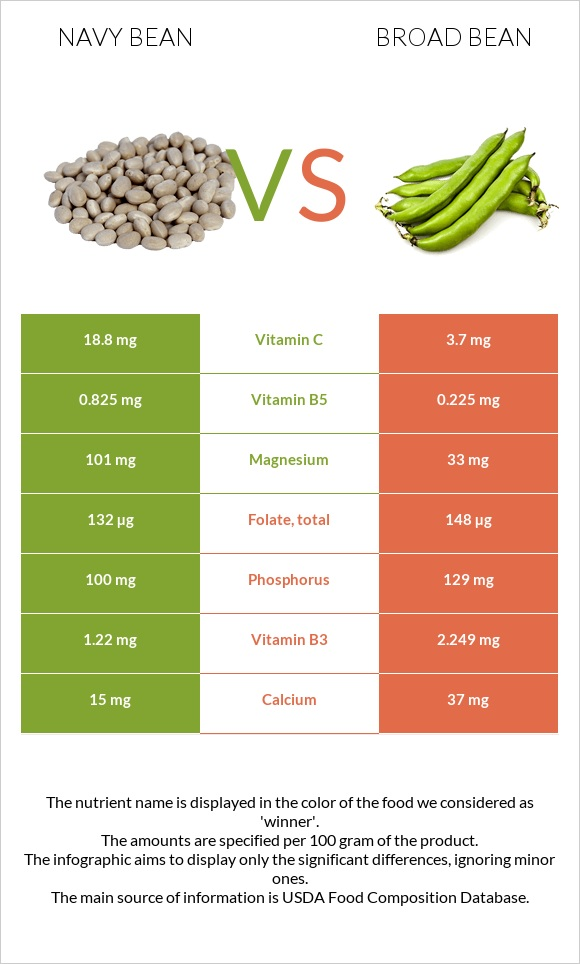Navy bean vs Broad bean infographic