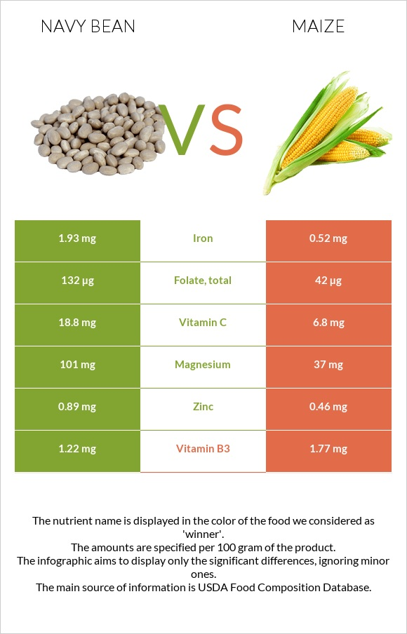 Navy bean vs Maize infographic