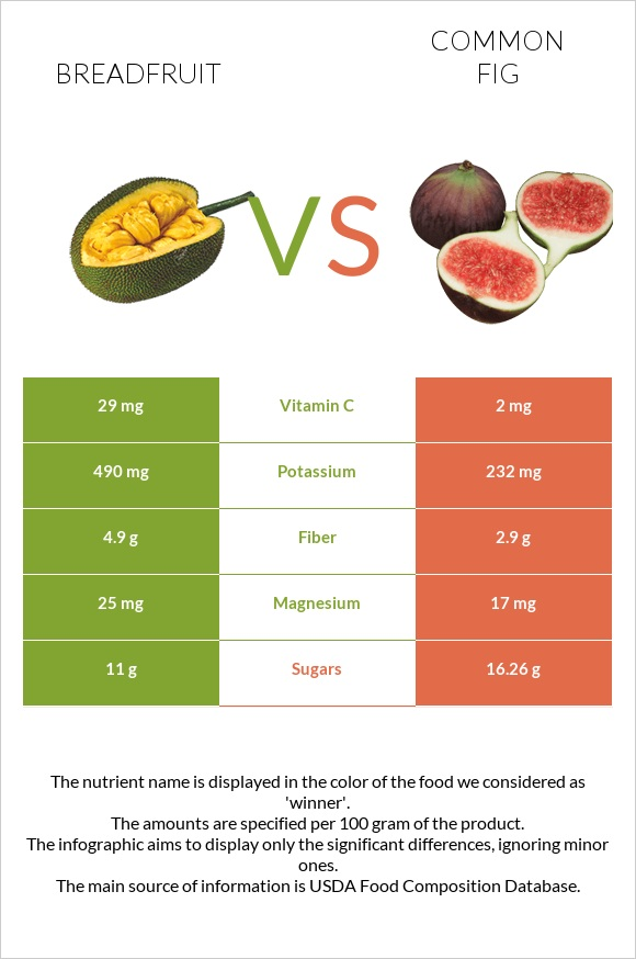 Breadfruit vs Common fig infographic