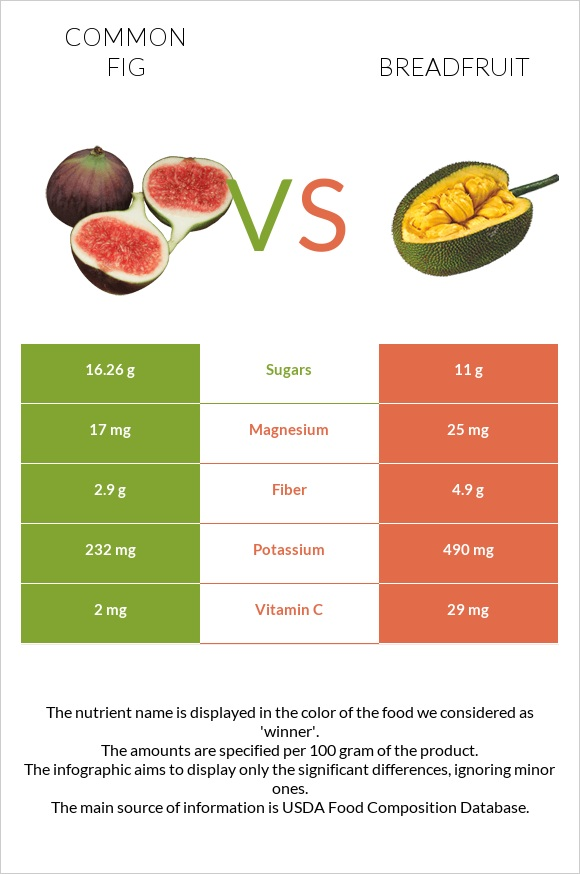 Common fig vs Breadfruit infographic