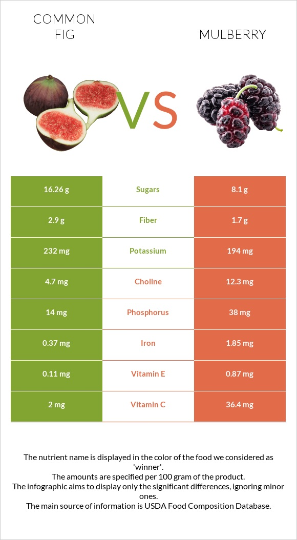 Common fig vs Mulberry infographic