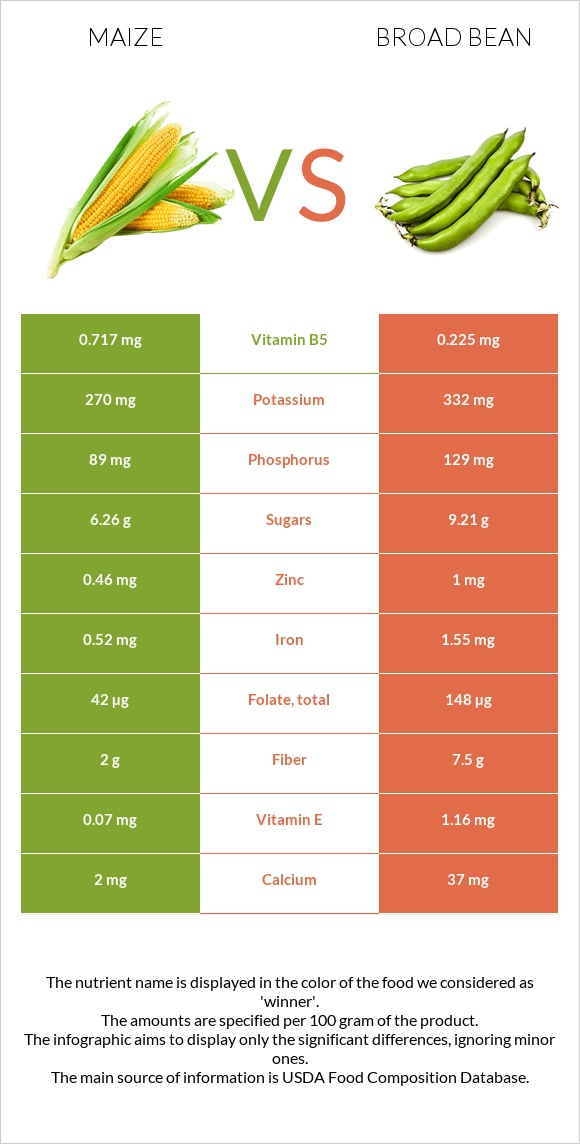 Maize vs Broad bean infographic