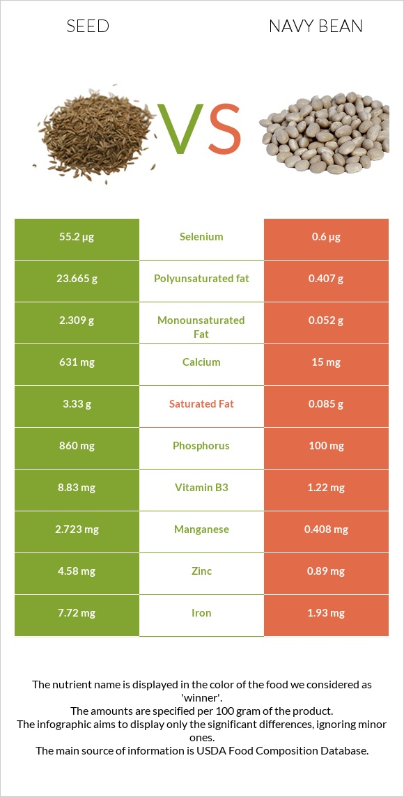 Seed vs Navy bean infographic