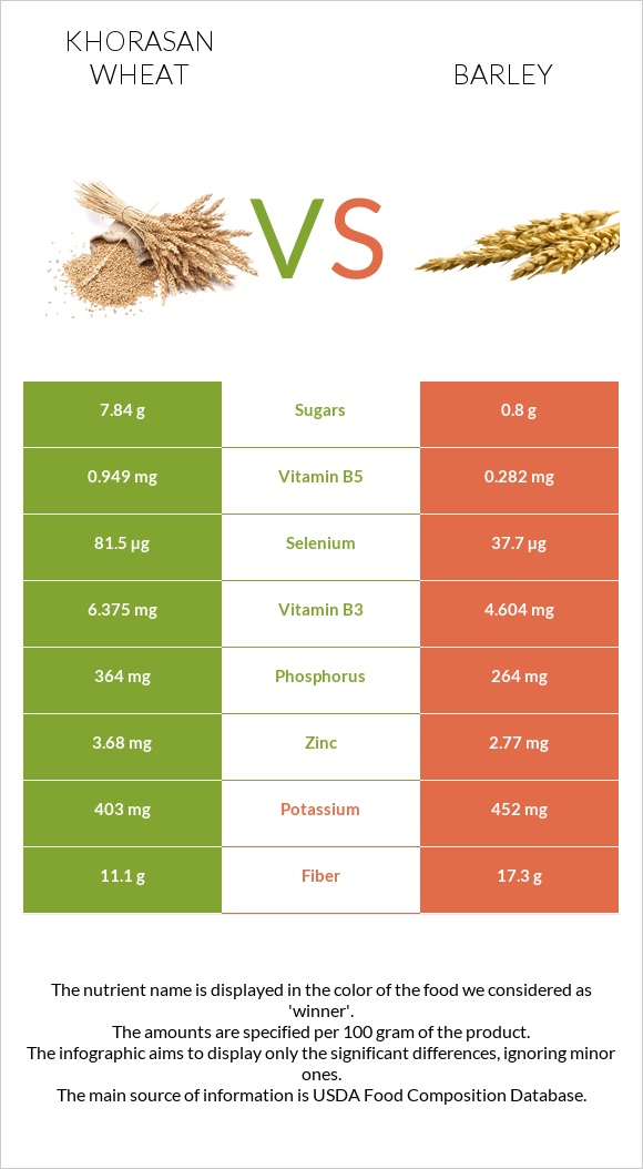 Khorasan wheat vs Barley infographic