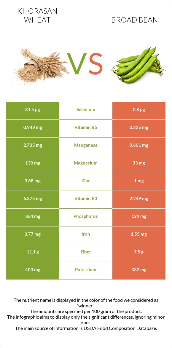 Khorasan wheat vs Broad bean infographic
