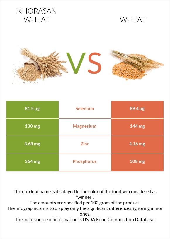 Khorasan wheat vs Wheat infographic