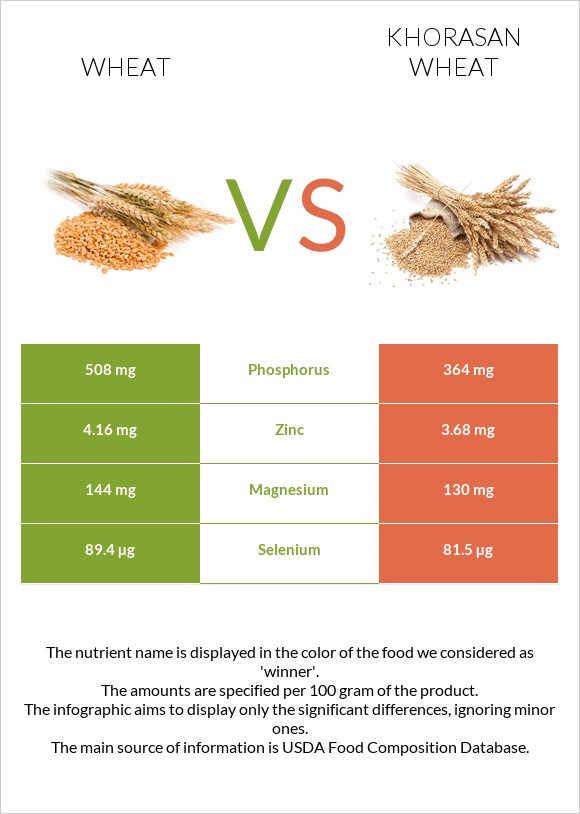 Wheat vs Khorasan wheat infographic