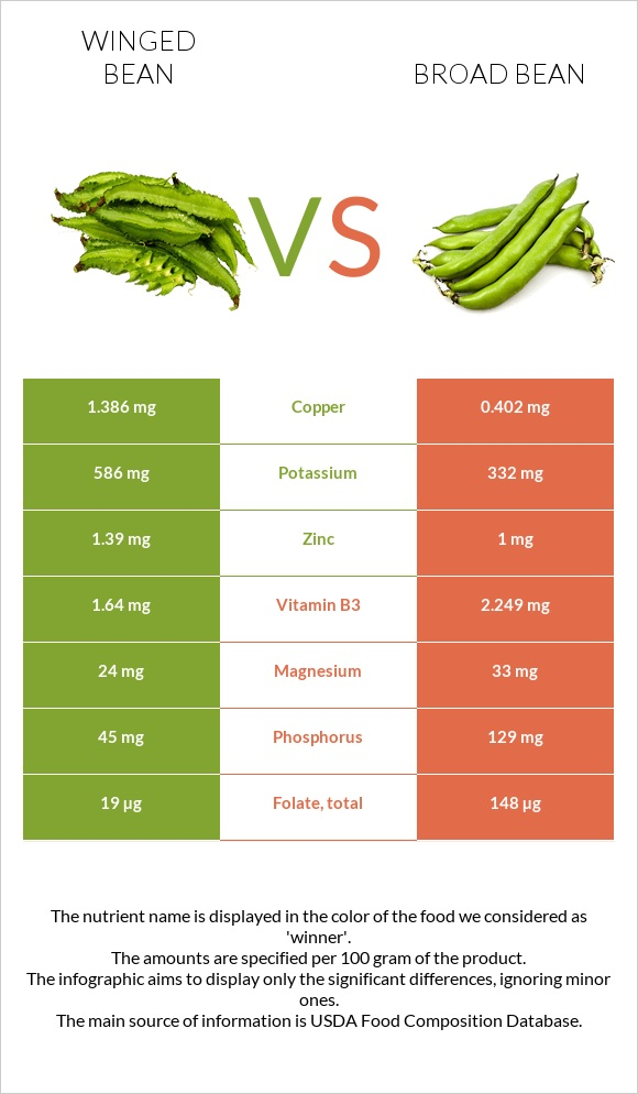 Winged bean vs Broad bean infographic
