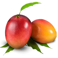 Common plum