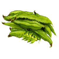 Winged bean