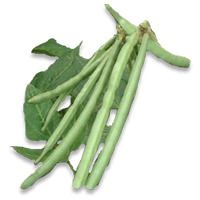 Cowpea (Black-eyed pea)